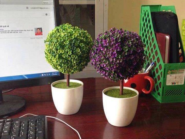 Chậu cây xanh cho bàn làm việc thêm đẹp
